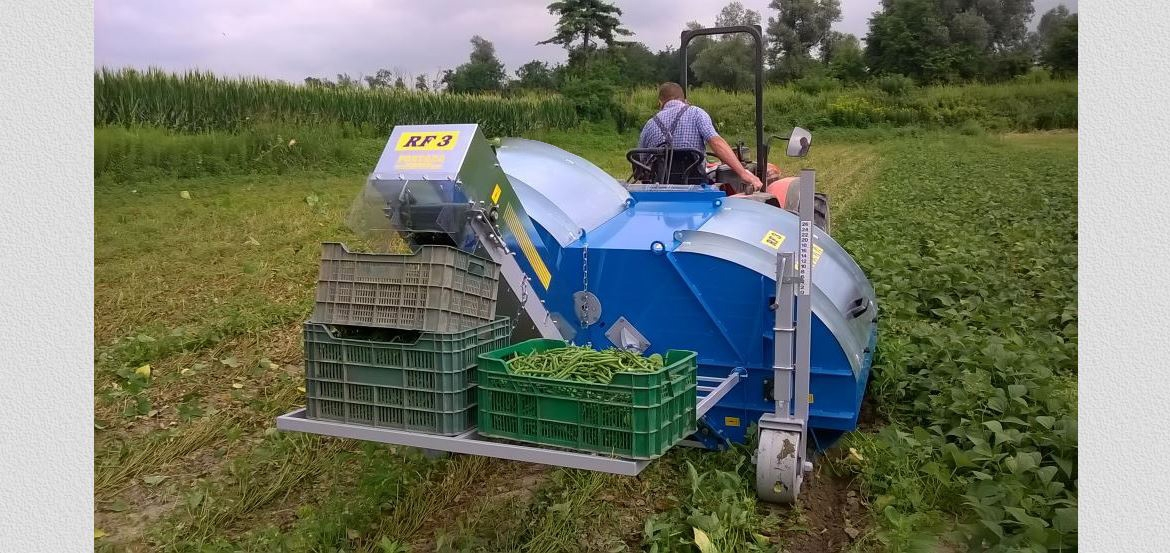 Mounted ONE-ROW small HARVESTER SERIES RF3 for BEANS and GREEN BEANS for FRESH MARKET